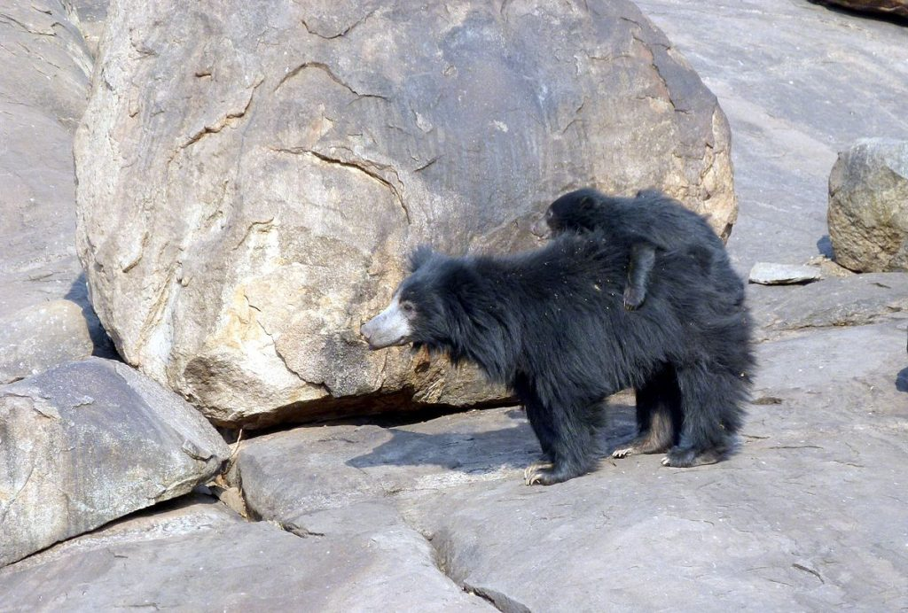 Daroji Sloth Bear Sanctuary in Karnataka