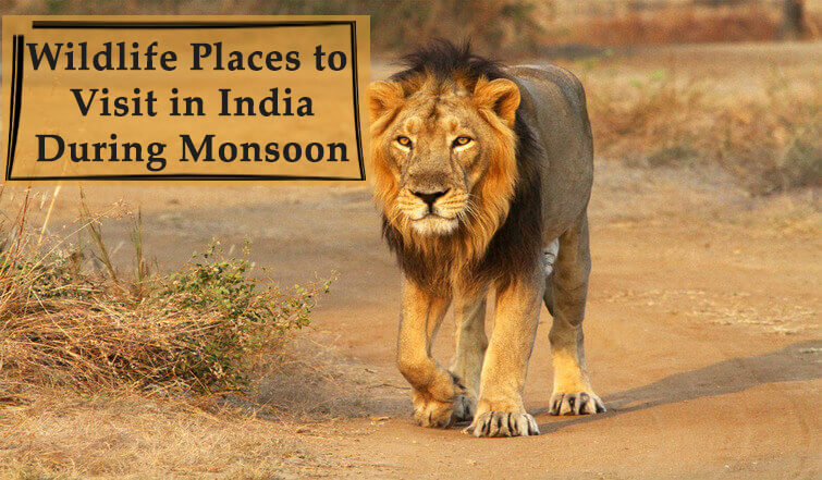 Wildlife Sanctuaries in India To Visit in Monsoon
