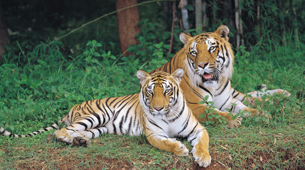 Bannerghatta National Park