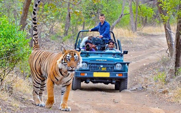 Jungle Safari in Corbett National Park