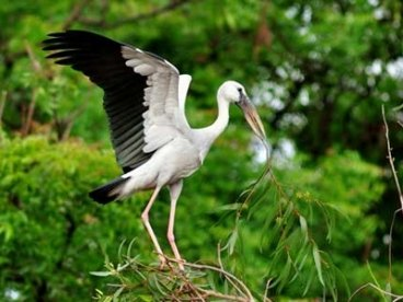 Bird Sanctuary (Bharatpur)