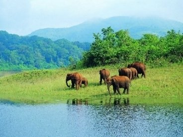 Periyar Wildlife Sanctuary (Thekkady)