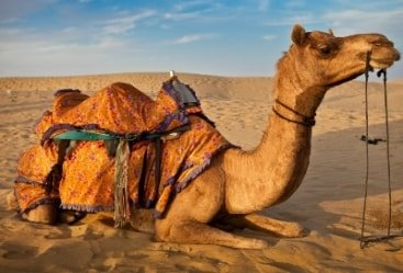 2 Nights 3 Days Rajasthan Tour
