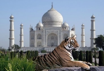 4 Nights 5 Days Bird Watching with Taj Wildlife Tour
