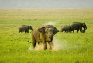 8 Nights 9 Days Central India Wildlife Tour