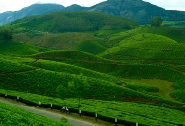 5 Nights 6 Days Hill Station of Kerala Tour