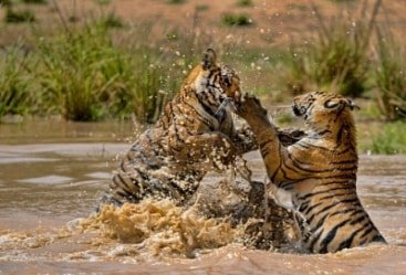 7 Nights 8 Days Khajuraho Bandhavgarh Wildlife Tour