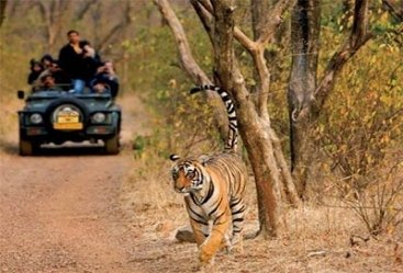 Fascinating Rajasthan Tour With Tiger Safari