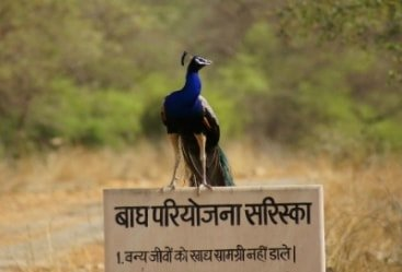 Sariska National Park Tour