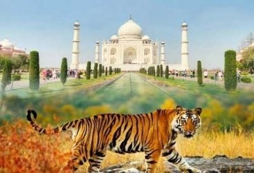 Taj Mahal Tour With Bandhavgarh